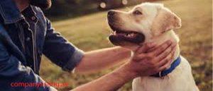 Animal Welfare Organizations In Dubai